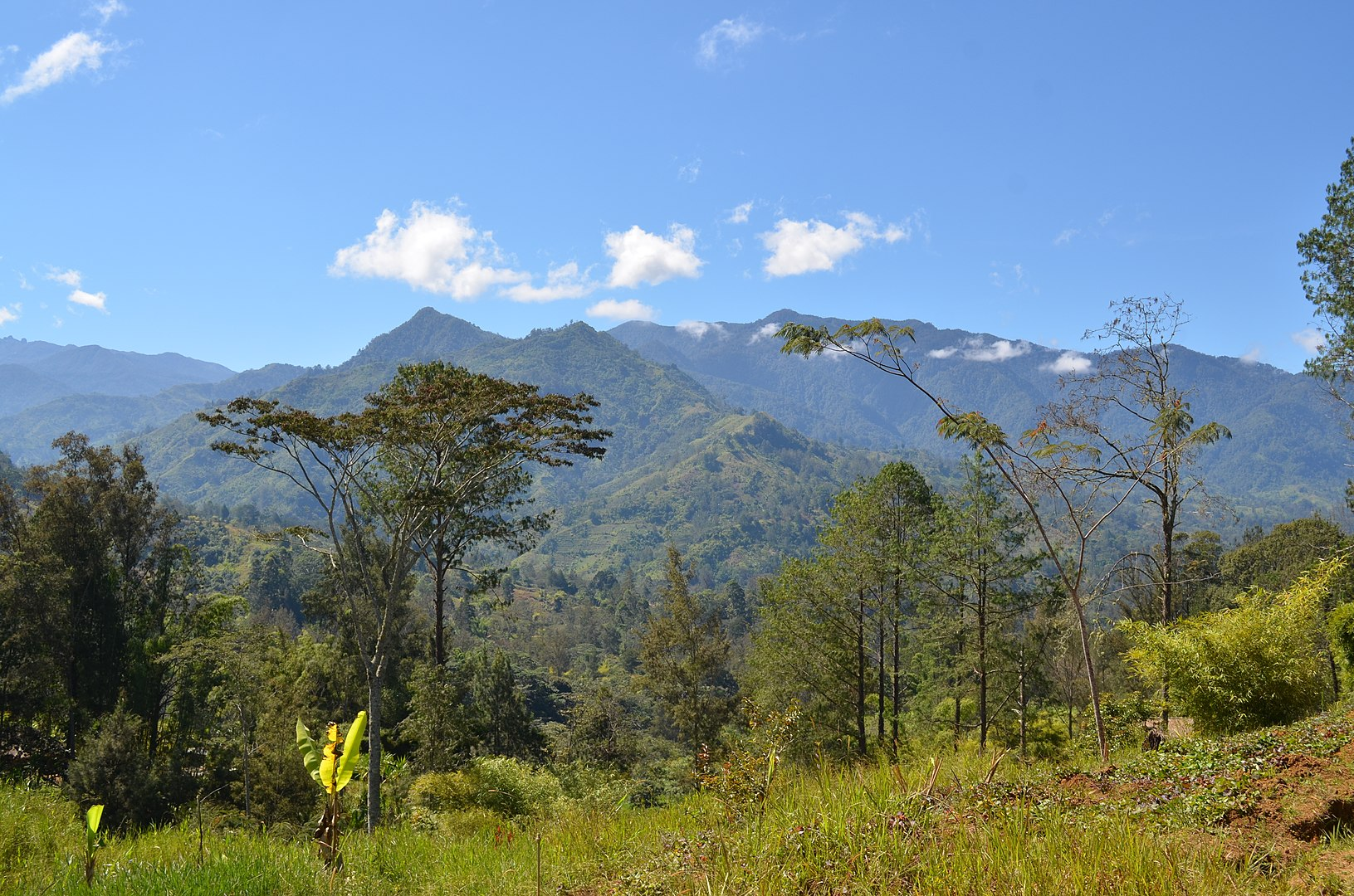 The West Papuan Highlands, where Trish first experienced aviation (By eGuide Travel - Papua New Guinea, CC BY 2.0, https://commons.wikimedia.org/w/index.php?curid=22969919)